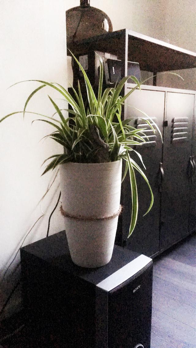 plante-geoffrey